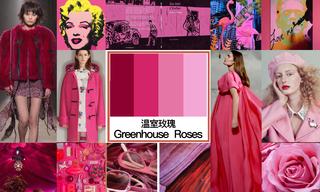 2020年初秋色彩:溫室玫瑰